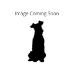 Petland Fairfield American Water Spaniel